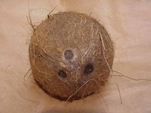 coconut a