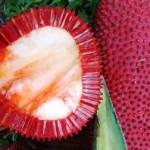 赤い果実、ブアメラ500VEでβ-クリプトキサンチン補給