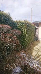 アカメガシ・ニーム4
